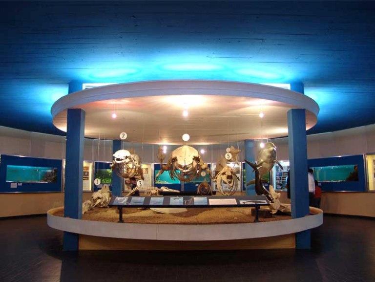 Interior-del-Museo-Oceanograficouno-de-los-sectores