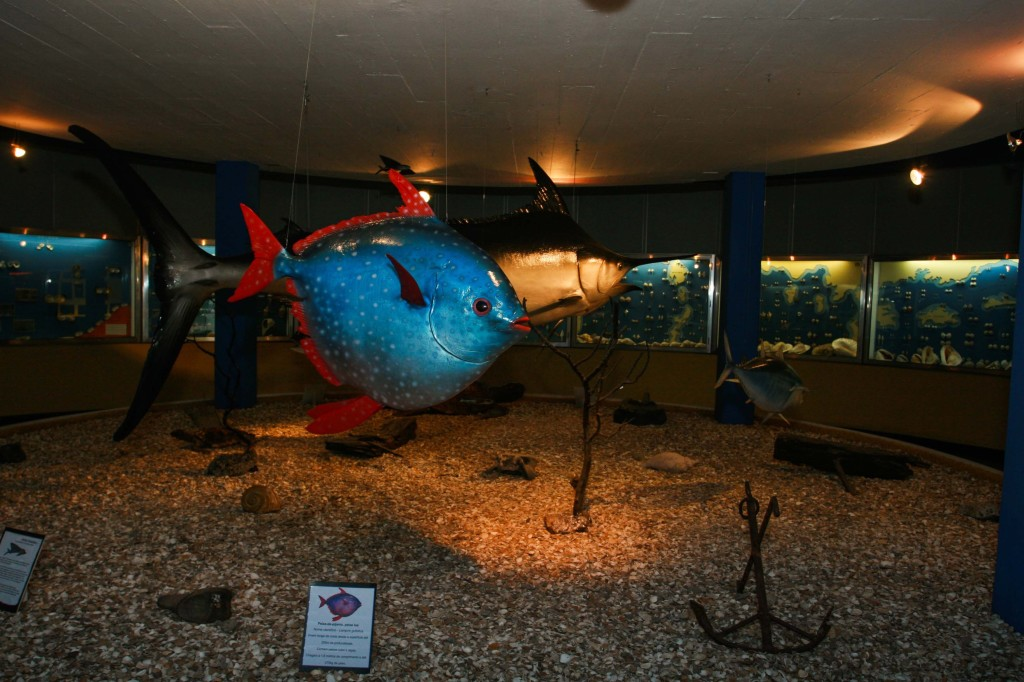 Museu Oceanográfico 2