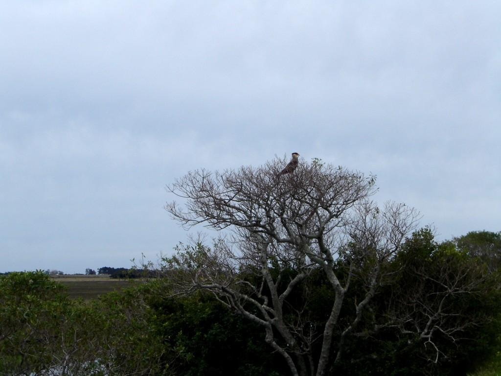 Um falcão na paisagem