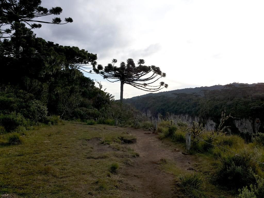Araucárias Canion