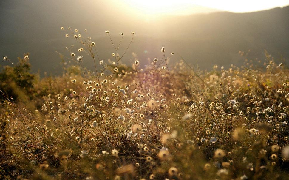 flores no prado