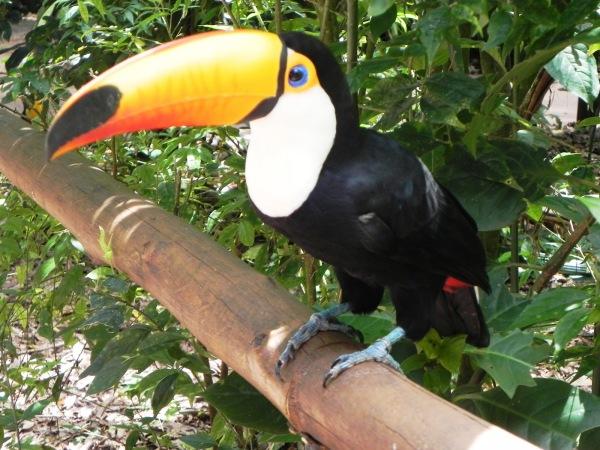 aves4