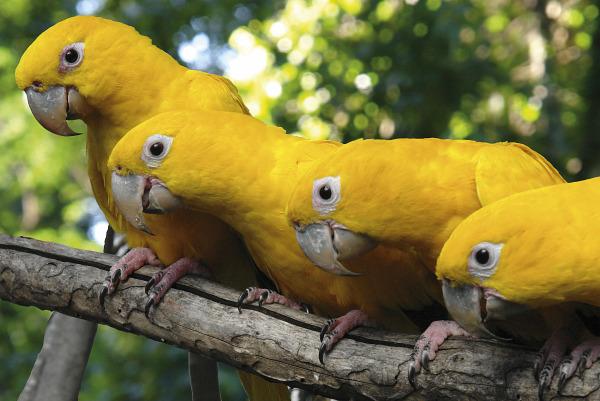 aves5
