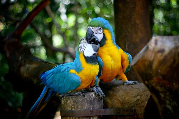 aves7