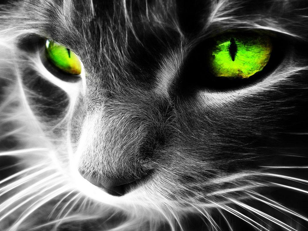 Gatos Dos Olhos Verdes Gato-com-olhos-verdes