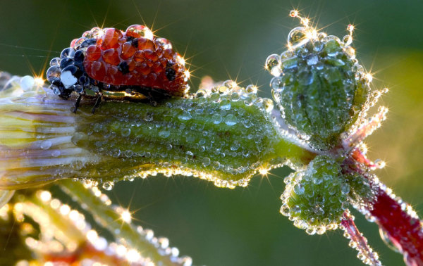 caters_ladybird_dew_01