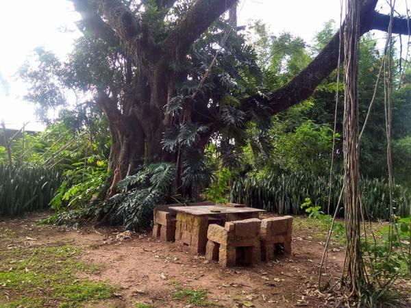 Carvalho tri centenário e mesa de pedras onde Hilda se sentava para supervisionar a construção da Casa do Sol